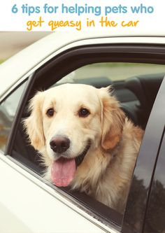 6 Tips For Helping Pets Who Get Queasy In The Car