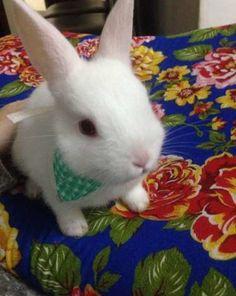 Bandana ou laço para coelhos