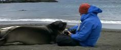When A Reporter Wanted To Get Some Close Up Footage Of Baby Seals, He Never Thought This Would Happen