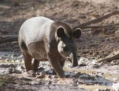 Bañado La Estrella. Patrimonio Natural. Formosa Ushuaia, Areas Protegidas, Fauna, Where The Heart Is, Country, Nature, Animals, Littoral Zone, Argentina