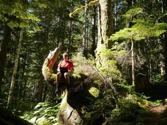 Not quite as comfy as the chair in the office but a hell of a better view  #coding #development #csharp #html #scripting #javascript #dotnet #database #sql #code #computers #laptop #computing #outdoors #adventure #travel #escape #explore #squamish #hiking #extremecoding