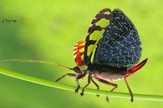 Mr.grasshopper by bug eye :) on 500px