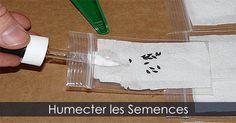 Sachets pour les semences - Entreposer les graines - Humecter les graines pour les faire germer. Instructions : http://www.jardinage-quebec.com/guide/stratification-des-graines/stratifier-semences-4.html