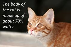 Thirsty cat? A Guide to How Much Water Your Cat Should Drink http://blog.naturalandclean.com/blog/thirsty-cat-a-guide-to-how-much-water-your-cat-should-drink