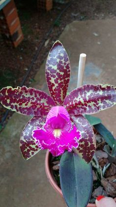 How To Keep Orchids Alive And Looking Gorgeous Unusual Flowers, Rare Flowers, Amazing Flowers, Orchid Leaves, Orchid Plants, Tropical Flowers, Orquideas Cymbidium, Orchid Seeds, Red Orchids