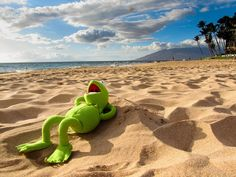 Kermit de kikker is op vakantie. 📌🐸✈☀ Kermit the frog is on holiday. Sapo Kermit, Reaction Pictures, Funny Pictures, Les Muppets, Sapo Meme, Funny Frogs, Miss Piggy, Epic Photos, Kermit The Frog