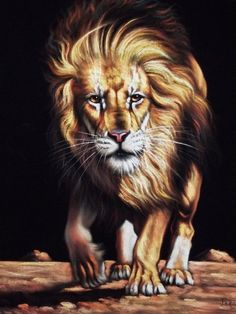 Hey, I found this really awesome Etsy listing at https://www.etsy.com/listing/190651438/lion-black-velvet-oil-painting