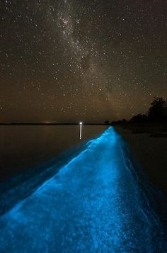 Bio-luminescent bays in Puerto Rico. Movement in the water causes a certain type of bio-luminescent bacteria to glow blue