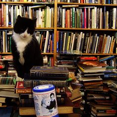 7 Pictures of Cats and Books
