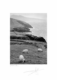 Giles Norman - Irish photography - County Kerry - Sheep