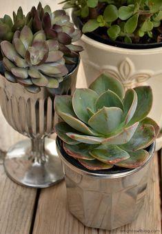 {Thrifty Thursday} DIY Mercury Glass Succulent Planters
