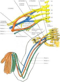 Brachial Plexus Injury Australia | BPI image