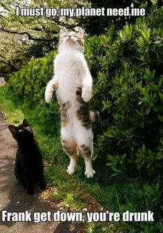 Funny cats                                                                                                                                                      More