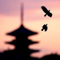 """""""Kyoto Dusk"""" Owen Schaefer. Two crows and a pagoda."""