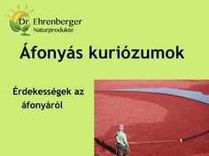 http://www.dr-ehrenberger.hu/afonyas-kuriozumok/ Áfonyás kuriózumok by SeresBim via slideshare  áfonya, antioxidáns, szem, szürkehályog, természetes gyógymód, természetes