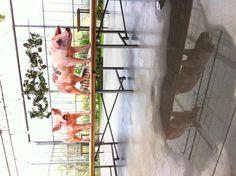 Verbeke Foundation (B) - zomerexpo 2013 - #art #nature  #landart #kunst #natuur