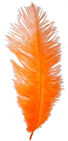 Our Orange Ostrich Feather Plumes are used for all sorts of projects! Place them in Eiffel Tower vases (or another tall vase) to build an intriguing and exciting centerpiece display. Our Ostrich Feathe