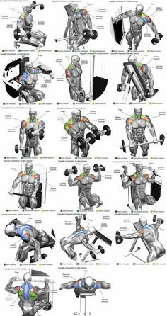 Workout Exercise Shoulder workouts to target specific muscle. - The Ultimate Shoulder Workouts Anatomy. We've put together this graphic of different types shoulder workouts. Knowing the anatomy of each muscle group is Fitness Workouts, Weight Training Workouts, Gym Workout Tips, Biceps Workout, Fitness Motivation, Sport Motivation, Deltoid Workout, Traps Workout, Workout Routines