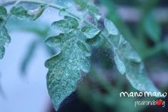 How to Prevent Plant Pests in the Garden - The Handy Mano