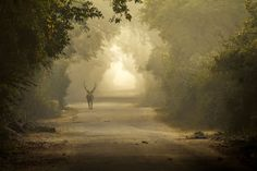 Amazing Morning at Bharatpur Photo by Debajit Bose -- National Geographic Your Shot