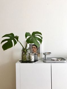 요즘 핫한 플랜테리어 식물 이름과 참고 이미지 공유해요:) : 네이버 블로그 Diy And Crafts, Plant Leaves, Bloom, Living Room, Deco, Interior, Plants, Doors, Indoor