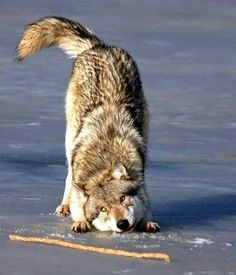 No matter how wild the dog is, they all secretly love a game of fetch.