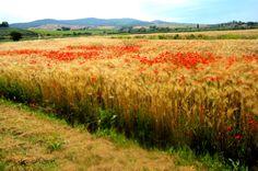 La #Maremma, e i colori dell'estate ormai finita, che riscaldano il cuore.