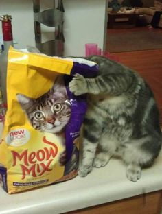Meow Mix # cat, funny