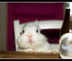 I'll have a carrot cupcake, please Awwwww Soooo cuteee!!!!! <3 He looks like my bunny Logan
