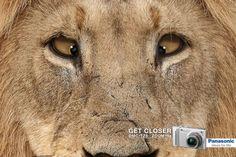 Get Closer - Panasonic (Lion)