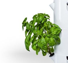 Variety of vegetables growing in Tower Garden, powered by aeroponics Another take on vertical gardening