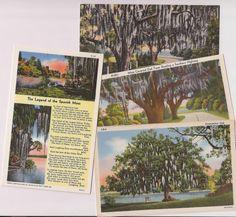 Spanish moss scenes, vintage linen postcard souvenirs