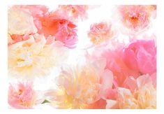 Wallpaper - Pastel peonies - 350x245