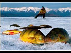 Сумашедший клев окуня. Подледная рыбалка.