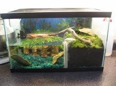 how we need to do our Newt tank!!
