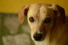 Cómo son las mordeduras de perros en niños - http://www.mundoperros.es/como-son-las-mordeduras-de-perros-en-ninos/