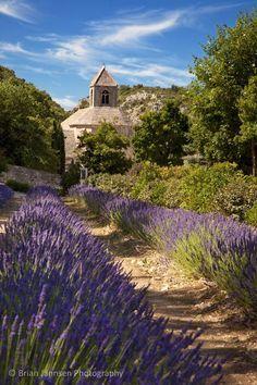 Lavender leading to Abbaye de Senanque near Gordes, Provence France. © Brian Jannsen Photography