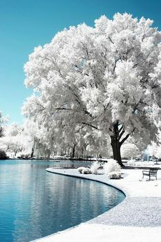 This photo is really cool (literally)! The perfectly white treetops blend well with the clear, smooth blue water below. This picture really is a winter wonderland!
