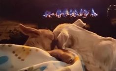 Daily Cute: 3-Legged Goat Finds A Family | Care2 Causes