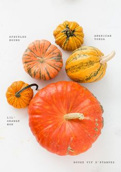 Heirloom Pumpkin Varieties for Fall: We are completely obsessed with pumpkins and winter squash this time of year. Pumpkin Squash, Pumpkin Spice, Pumpkin Varieties, Squash Varieties, Squashes, Autumn Inspiration, Autumn Ideas, Fall Pumpkins, Fall Decor