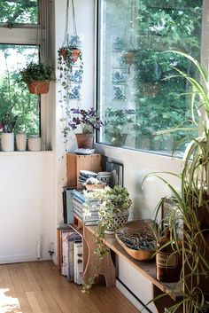 Living rooms, windows & plants