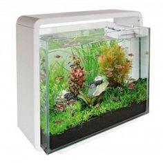 SuperFish Home 40 Glass Aquarium Fish Tank White with Filter & LED Light Klein Aquarium, Aquarium Set, Mini Aquarium, Glass Aquarium, Aquarium Fish Tank, Fish Tanks, Fish Jumps, Fish Home, Aquarium Supplies
