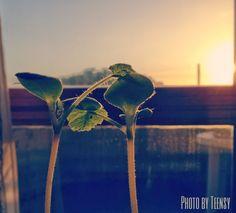 Rubrica - Dall'alba al Tramonto  Pumpkins Sunrise
