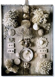 no info on this piece, i really love it, white can be such a powerful non colour... Shell Art, Cabinet Of Curiosities, Driftwood, Sea Shells, Shell Display, Shell Collection, Nature Collection, Coral Design, Playa Beach