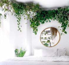 21 Houseplant Decor Ideas That Will Make Your Home 200% Prettier
