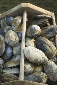 Before cooking, soak clams in cold, fresh water for 20 minutes to ...