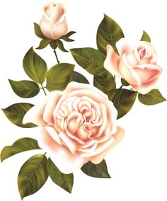 1423291570_pink-roses-collection-1-05.png (500×603)