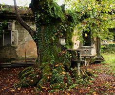 Sacred tree in the Elyr-Nykha shrine near Ochamchira, Abkhazia