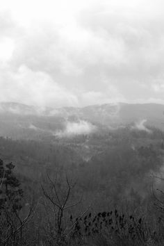 Jellico Mountain TN, morning fog