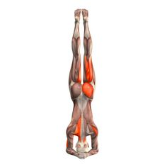 Supported headstand - Salamba Sirsasana - Yoga Poses | YOGA.com